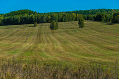 Mowed grass in a strip on a wild field. Field after haymaking. The chopped lawn seemed to have been combed Stock Image