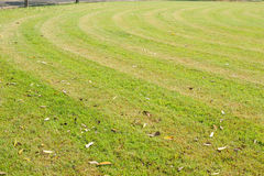 Mowed grass with stripped pattern cut Stock Images