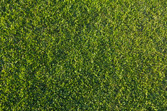 Mowed grassland, lawn in sunset light. Manicured green lawn lit by the setting sun Royalty Free Stock Photo