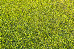 Mowed grassland, lawn in sunset light. Manicured green lawn lit by the setting sun Royalty Free Stock Photos