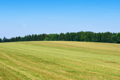 Mowed green grass field with forest Royalty Free Stock Photo