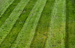 Mowed green grass with parallel tracks Royalty Free Stock Photos