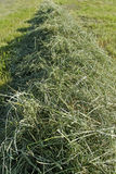 Mowed hay. Royalty Free Stock Photos