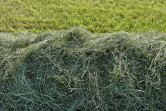 Mowed hay. Stock Photos