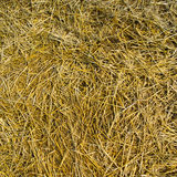Mowed hay texture Royalty Free Stock Images