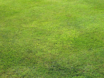 Mowed lawn Royalty Free Stock Image