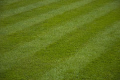 Mowed lawn. Green grass background Royalty Free Stock Photography
