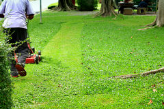 Mowed lawn mower Stock Image