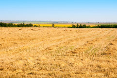 Mowed wheat Stock Image