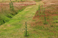 Mowed winding way across the meadow Royalty Free Stock Photo