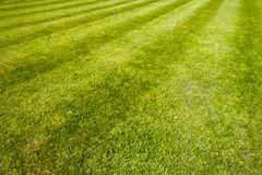 Mower stripes in a grass lawn Stock Photos