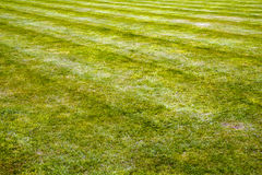 Mower stripes in a grass lawn Stock Images