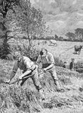 Mowing Clover. On engraving from 1886. Engraved by G.King after a picture by H.F.Davey and published in the Illustrated London News Stock Photo