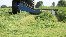 Mowing clover field with rotary cutter Royalty Free Stock Photos