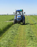 Mowing clover field with rotary cutter Stock Photo