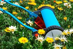 Mowing flowers. Manual mower in flowers, kind of environment concept Royalty Free Stock Photography