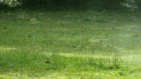 Mowing the grass stock footage
