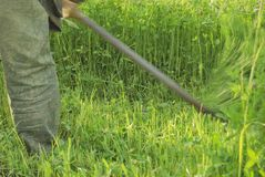 Mowing the grass by hand is a scythe. stock photo