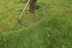 Mowing grass with a scythe. Stock Photography