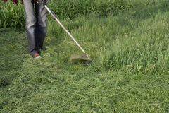 Mowing green grass using a fishing line trimmer Stock Photography