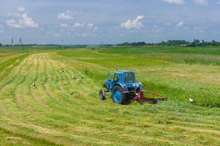 Mowing hay with stork inspection on a water-meadow Stock Photos