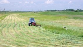 Mowing hay with stork inspection on a water-meadow in Ukraine at summer time stock video footage