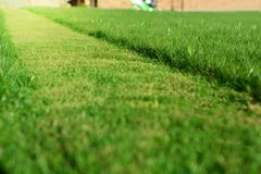 mowing the lawn. A perspective of green grass cut strip royalty free stock image