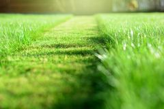 mowing the lawn. A perspective of green grass cut strip. Selective focus royalty free stock photo
