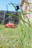 Mowing the Lawn. Tall green grass stands in sharp focus as a red lawn mower cuts its paths through the yard. A shallow depth of field ( DOF ) is used to make the Stock Photo