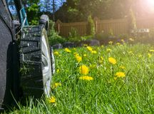 Mowing lawns. Lawn mower on green grass. Mower grass equipment. Mowing gardener care work tool. Close up view. Sunny day. Soft lig royalty free stock photo