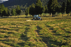 Mowing pasture. Tractor mowing pasture for silage, West Coast, South Island, New Zealand Stock Images