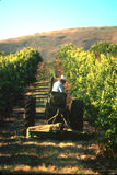 Mowing the rows. In a lemon orchard in Califorina Royalty Free Stock Photography