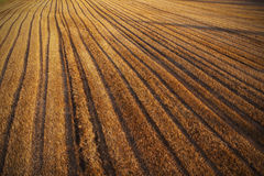 Mown cornfield Royalty Free Stock Photography