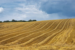 The mown cornfield Royalty Free Stock Images