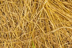 Mown dried grass - background image stock photo