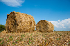 Mown field with bales  straw Royalty Free Stock Photos