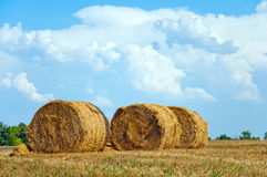 Mown field with bales  straw Stock Image