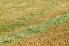 Mown field Stock Images