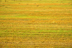 Mown field Royalty Free Stock Photos