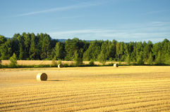 Mown field in Norway Royalty Free Stock Images