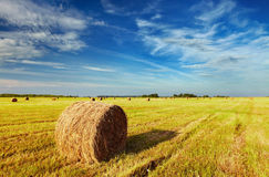 Mown field Royalty Free Stock Images