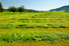 Mown Fields Royalty Free Stock Image