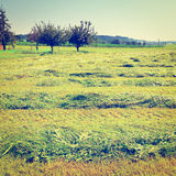 Mown Fields Royalty Free Stock Photos
