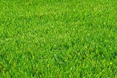 Mown grass Stock Photo
