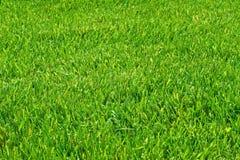 Mown grass. Fresh mown green grass texture Stock Photo