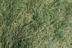 Mown Grass Background Stock Photo