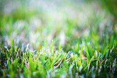 Mown grass background. Blurred bokeh Stock Image