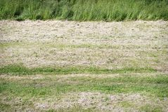 Mown grass field Stock Image