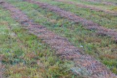 Mown grass with lines Royalty Free Stock Photo