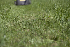 Mown grass Royalty Free Stock Images